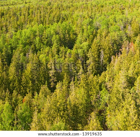 Birds-eye view at a boreal forest lit by warm afternoon sun - stock photo