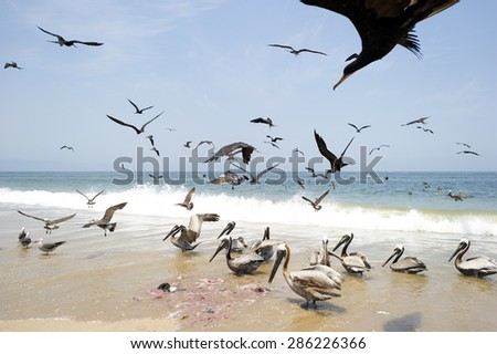 Birds feeding on the beach.