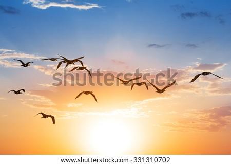 birds fly on a sunset background - stock photo
