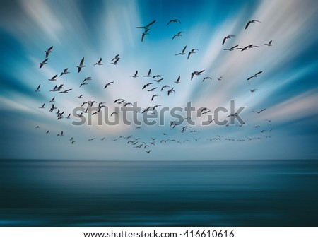 birds flying and abstract sky ,spring background abstract happy background,freedom birds concept