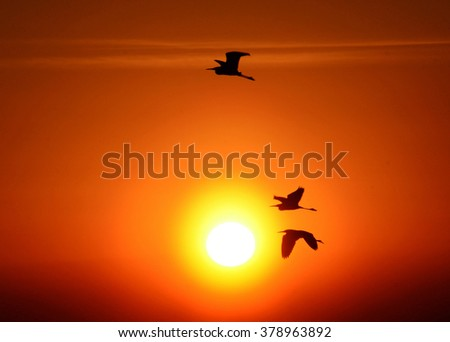Birds flying at the sunset