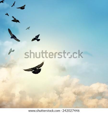 Birds flying in the sky - stock photo