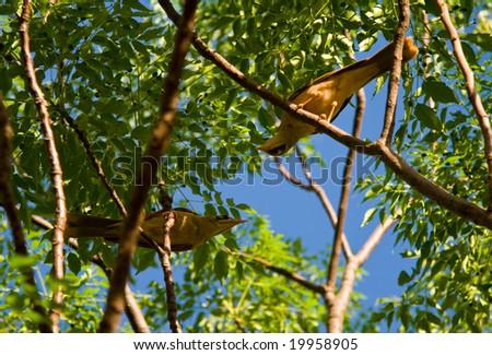 Birds in a tree - stock photo