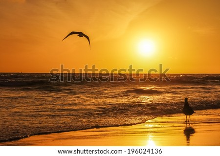 Birds in the sunset  - stock photo