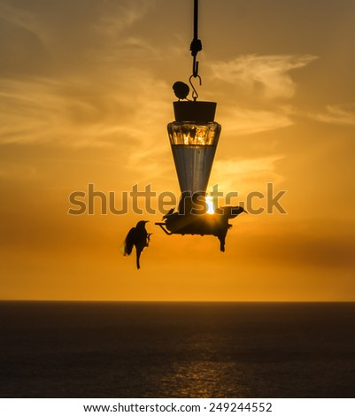 Birds in the sunset - Curacao a tropical island in the Caribbean Ocean - stock photo
