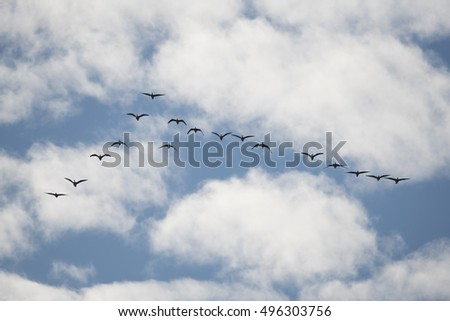 Birds migrating, blue sky with clouds