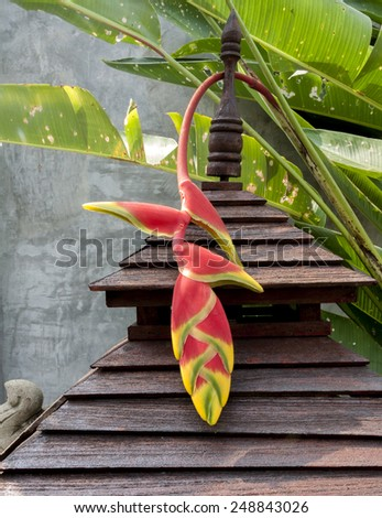 Birds Of Paradise Flower  - stock photo