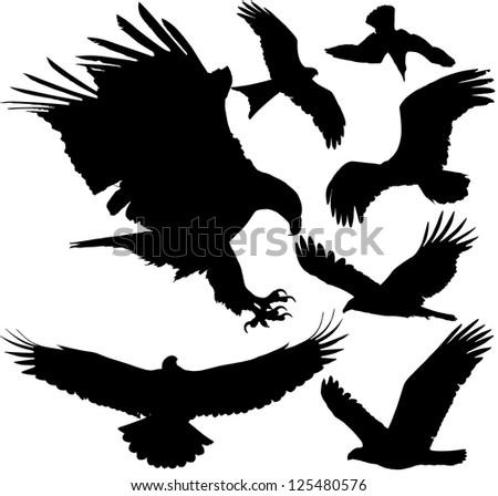 Birds of prey (eagle, hawk, falcon, griffon vulture etc.) silhouettes. Raster version. - stock photo