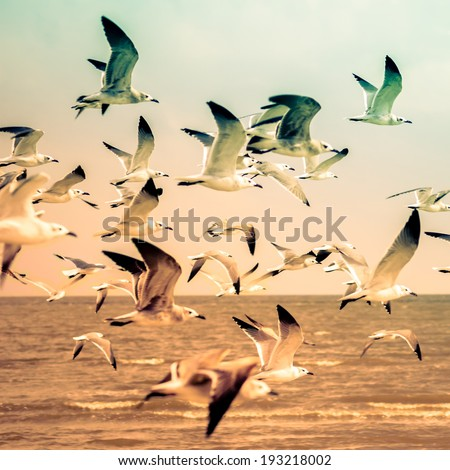 Birds on a Beach, retro instagram processing, blurry - stock photo
