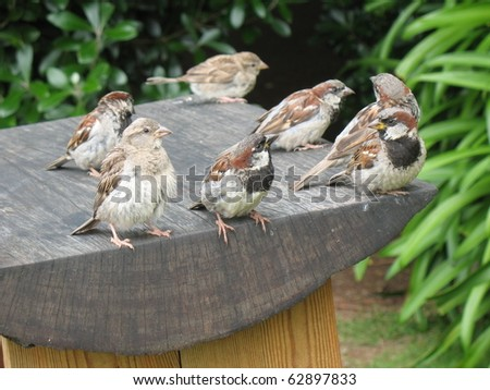 Birds on a bench at lunch time - stock photo