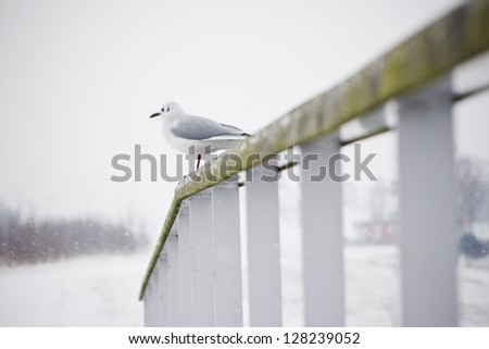 Birds on a fence on a snowy day - stock photo