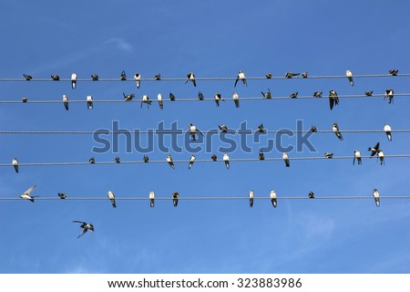 Birds on a wire against the sky like notes