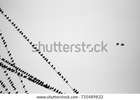 Birds on a wire black and white