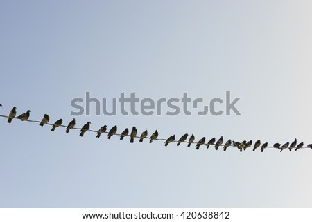 Birds on a wire graphic line organized against blue sky - stock photo