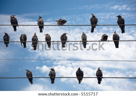 Birds on a Wire on a background of the blue sky with clouds - stock photo