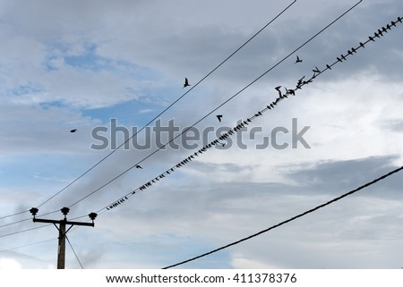 birds on power line - 2 of 4