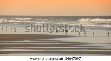 Birds on the Beach Outerbanks North Carolina - stock photo