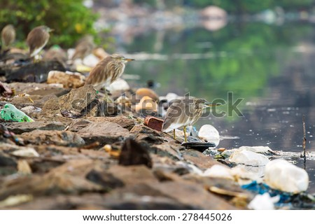 Birds on the river between garbage - stock photo