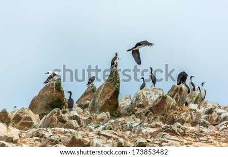 Birds on the rocks of the island Ballestas in Paracas national park. It is a designated UNESCO World Heritage Site - Peru, South America