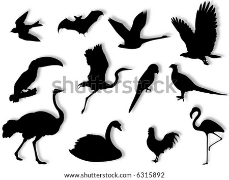 Birds silhouette to represent different species