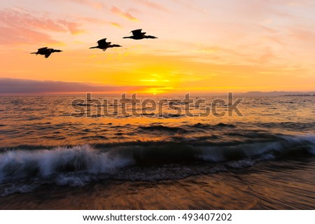 Birds silhouettes flying is three seabirds flying over the water as the sun sets on the colorful ocean horizon.
