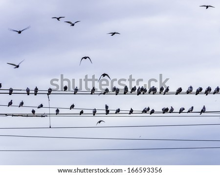 Birds sitting on power line, flying and sitting. - stock photo