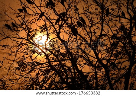 Birds sitting on tree after long day with sunset and pretty colorful sky in the backdrop - stock photo