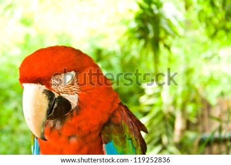 Birds sleep during the day. - stock photo