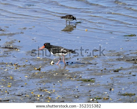 birds wading in the sea looking for food
