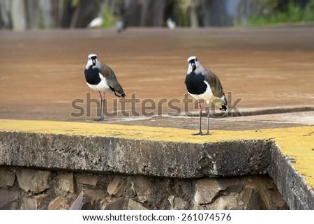 Birdsong in civilization  - stock photo