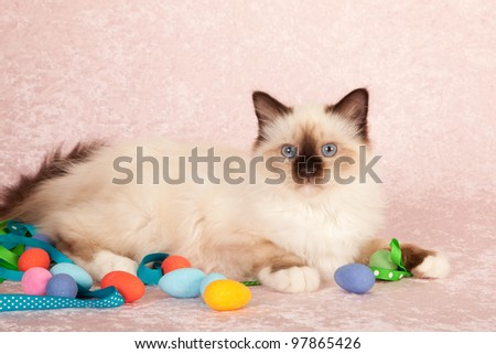 Birman kitten on pink background with easter eggs - stock photo