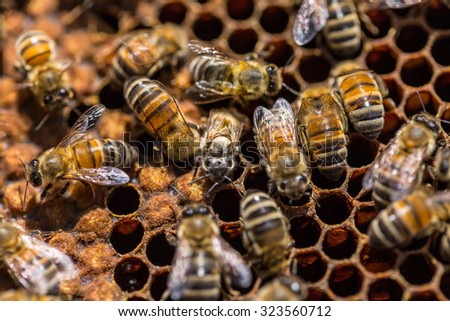 Birth of a bee on honeycomb - stock photo