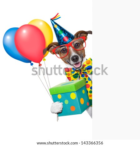birthday dog with balloons behind a white placard - stock photo