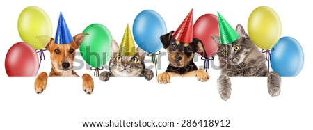 Birthday themed composite of a group of cats and dogs - stock photo