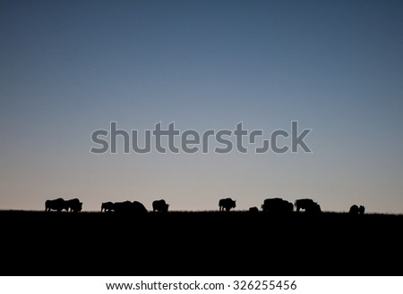Bison Herd in Silhouette  - stock photo