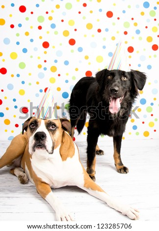Black and Brown Dogs Wearing Striped Party Hats - stock photo
