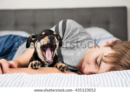 Black and Brown Terrier Mix Puppy Falling Asleep on Striped Bed Next to Boy