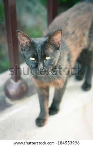 Black and ginger cat - stock photo