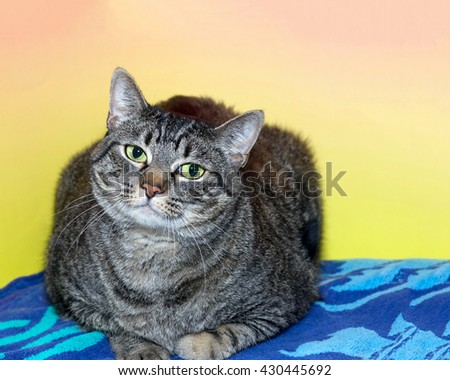 Black and gray striped tabby cat laying on a patterned blue blanket with textured pink and yellow background, looking forward with head tilted - stock photo
