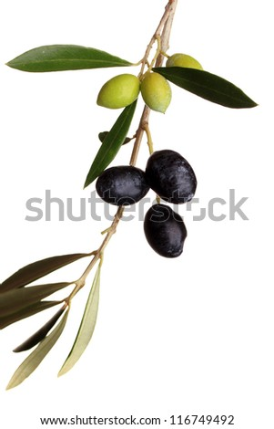 Black and green olives on branch with leaves over white background