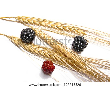 Black and red berries and golden wheat, isolated in white - stock photo