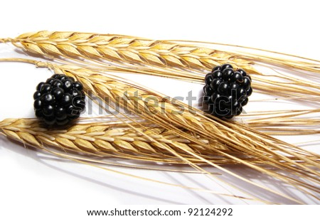 Black and red berries and golden wheat, siolated in white - stock photo