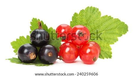 black and red currants isolated on the white background - stock photo