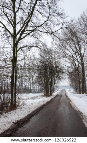 Black and wet asphalt road flanked by bare trees in a  snowy winter landscape in a rural Dutch area.