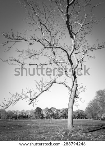 black and white bare tree in winter, Melbourne Australia