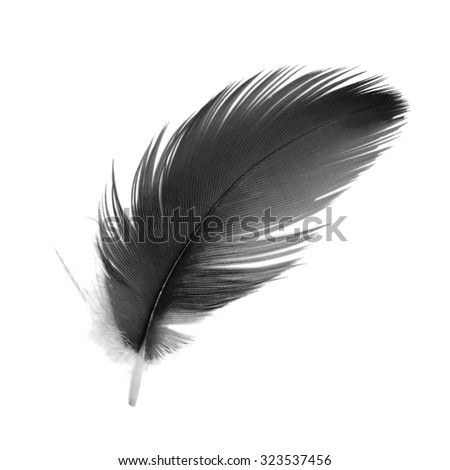 Black and white bird feathers