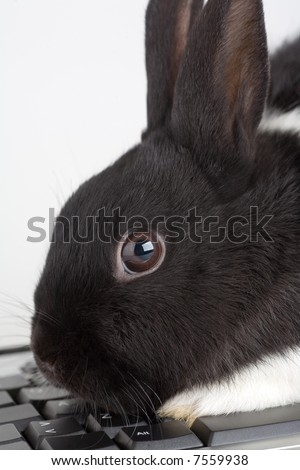 black and white bunny on the keyboard