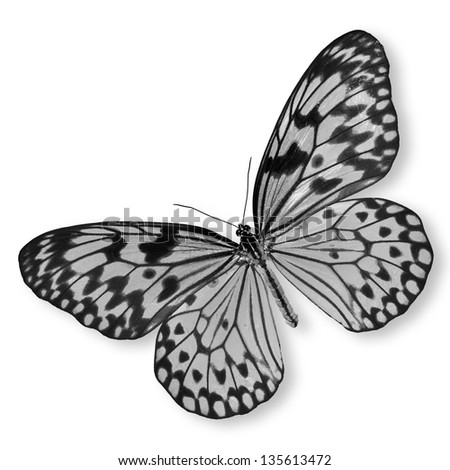 Black and white butterfly Isolated on white background.