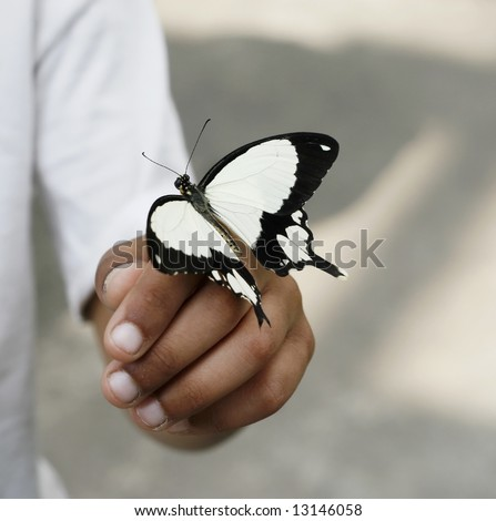 Black and white butterfly landed on a man's hand