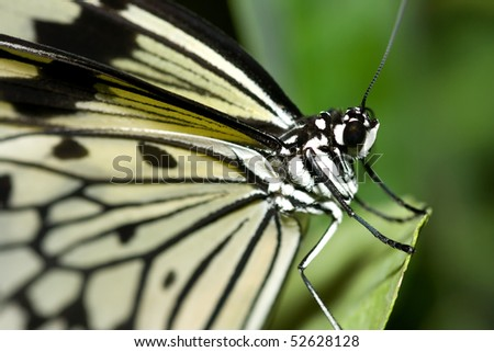Black and white butterfly portrait sitting on leaf - stock photo